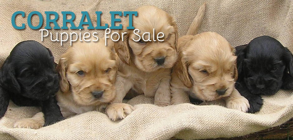 Dogs For Sale Slide