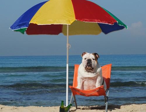 Qué y Cómo Prevenir: El Golpe de Calor en Nuestras Mascotas