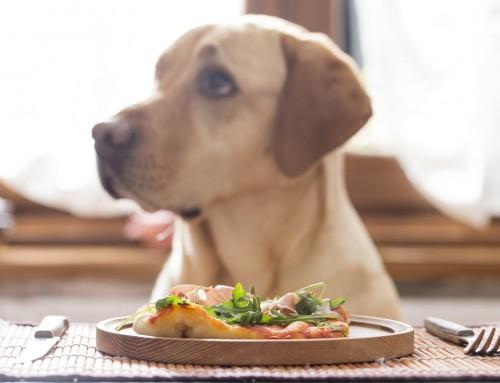 6 Alimentos Que Son Tóxicos para Tu Perro