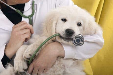 Cachorro de perro con Leishmaniosis