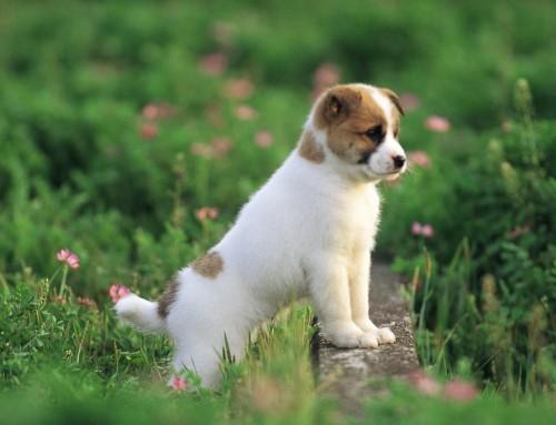 ¿Qué Es la Parvovirosis Canina y Cómo Puedo Prevenirla?