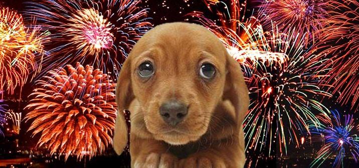 Perro y fuegos artificiales corralet