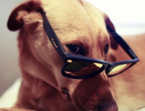 Los Perros Son Más Listos de lo Que Crees: La Inteligencia Canina