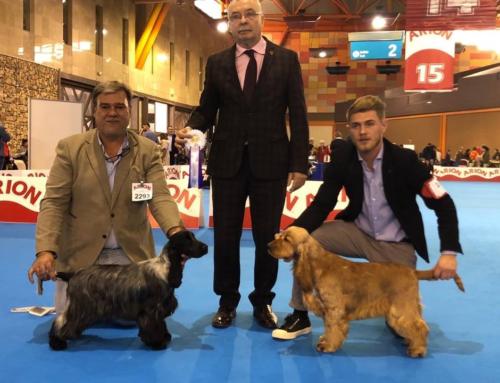 Corralet Dandy se lleva el reconocimiento Best Young Dog Class de la XXXII Exposición Internacional Canina Málaga 2018