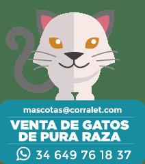 ICONOS-CORRALET-Juan-Gatos
