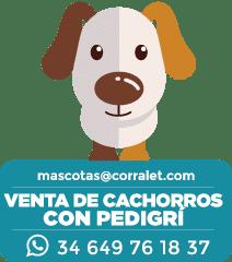 ICONOS-CORRALET-juan-perros