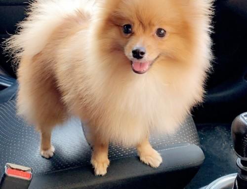 ´´Gracias por este hermoso cachorro y la felicidad que ha traído a casa´´